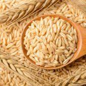このこのごはん玄米