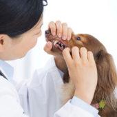 このこのふりかけ歯科検査