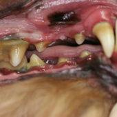 このこのふりかけ歯周病の口