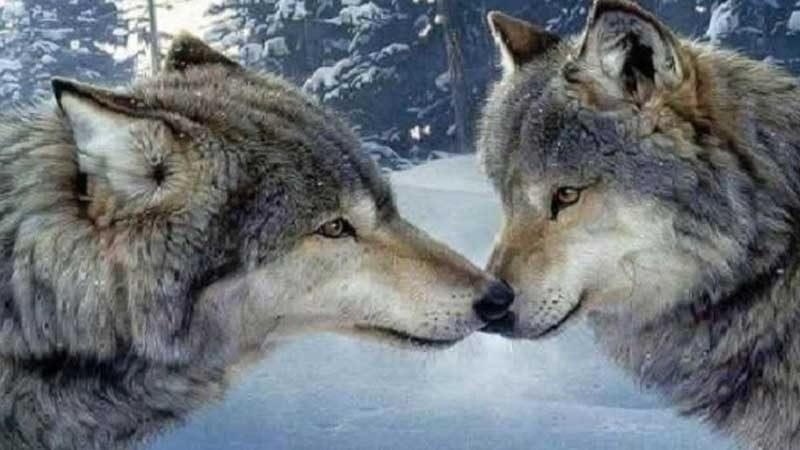 このこのごはんと狼
