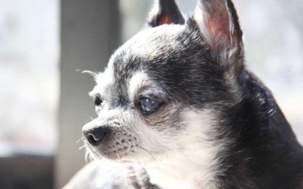 このこのごはん高齢犬・シニア・老犬