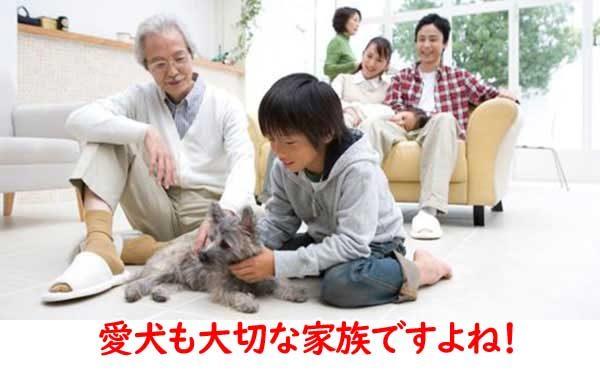 愛犬も家族