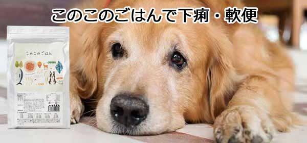下痢や軟便の犬